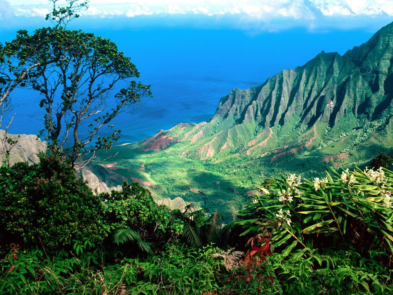 ハワイ<br>語学留学