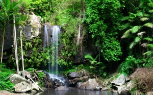 Curtain Falls Mount Tamborine_crop