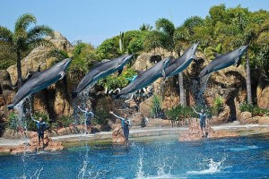 Seaworld-Dolphins