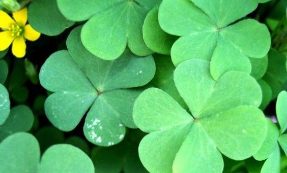 st-patrick-why-green_HD__366187_still_624x352