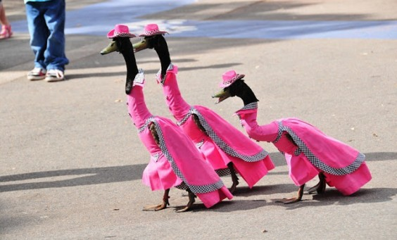 Sagar-Vision-pied-piper-duck-fashion-show-1