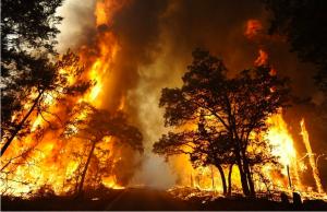 Black-Saturday-Bushfire