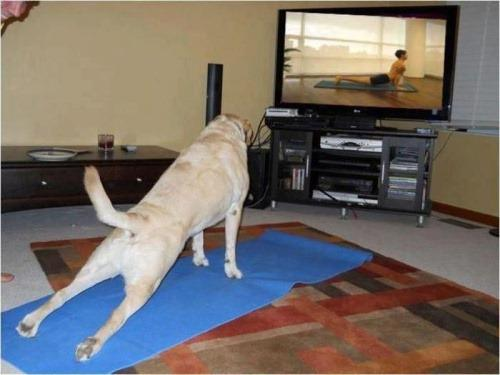 1350299199-Fitness-dog