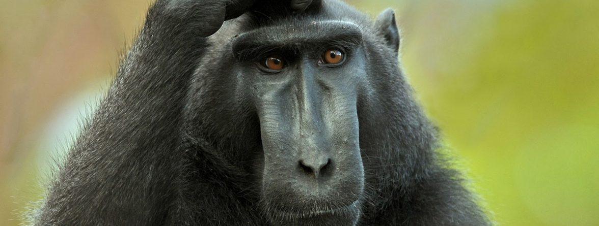 Monkey HD Wallpapers (1)