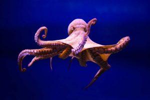 19-octopus.w710.h473.2x