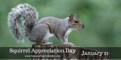 Squirrel-Appreciation-Day-January-211-e1481826531433