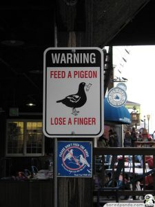 Funny-Signs-Pigeon-4