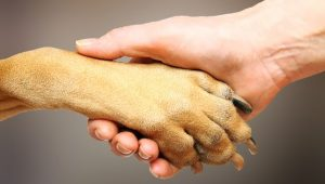 dog paw facts.jpeg.653x0_q80_crop-smart