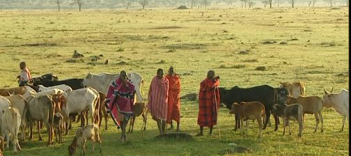 maasai and ushi