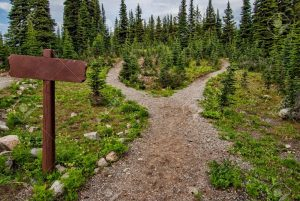 15717290-showing-a-path-splitting-into-two-going-into-the-woods-with-a-blank-signpost