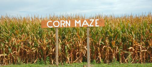 Corn_Maze_1