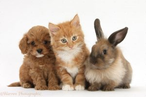 puppy-kitty-bunny